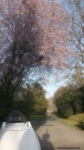Foto eines Velomobils unter einem blühenden Baum
